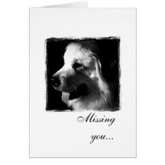 Great Pyrenees Black and White Photo products Card