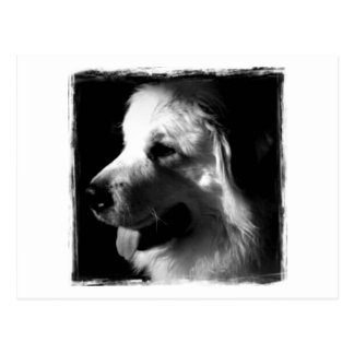 Great Pyrenees Black and White Photo products Postcard