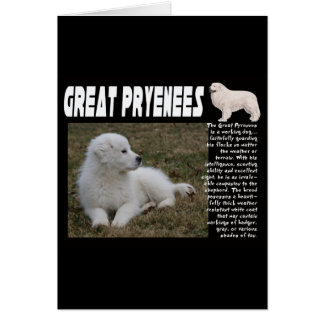 GREAT PYRENEES BREED DESCRIPTION PUPPY PHOTO CARD