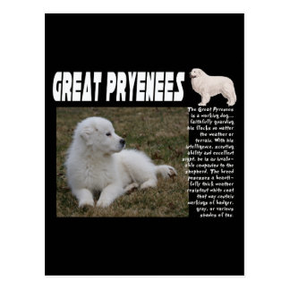 GREAT PYRENEES BREED DESCRIPTION PUPPY PHOTO POSTCARD