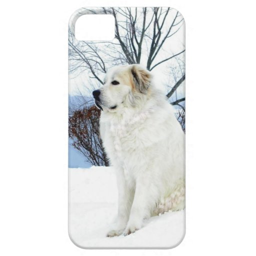 Great Pyrenees case Case For iPhone 5/5S