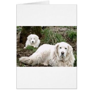 Great Pyrenees Dog and puppy Card
