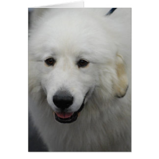 Great Pyrenees Dog Breed Greeting Cards