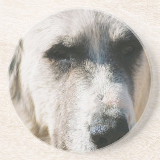 Great Pyrenees Dog Coasters