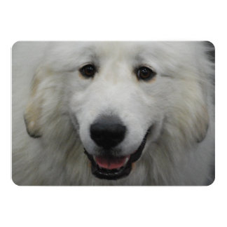 Great Pyrenees Dog 5x7 Paper Invitation Card