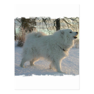 Great Pyrenees Dog Postcard
