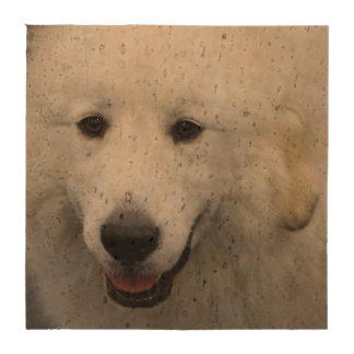 Great Pyrenees Dog Drink Coasters
