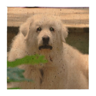 Great Pyrenees Dog Drink Coaster