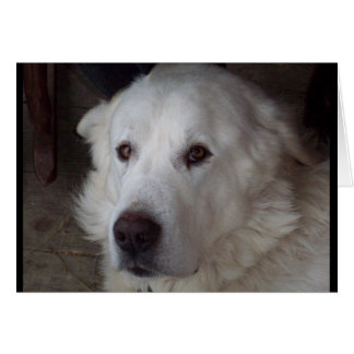 Great Pyrenees Dog saying I love you Card