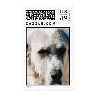 Great Pyrenees Dog Stamp
