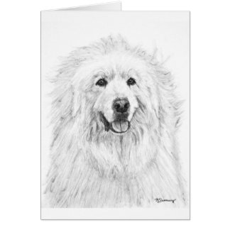 Great Pyrenees Drawing Card