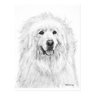 Great Pyrenees Drawing Post Card