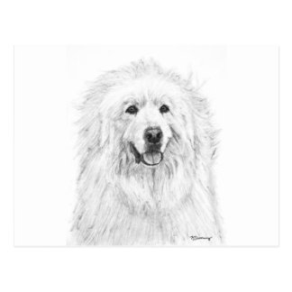 Great Pyrenees Drawing Postcard