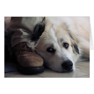 Great Pyrenees, Gentle Giant Card