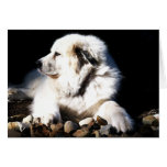 Great Pyrenees, Gentle Giant Cards