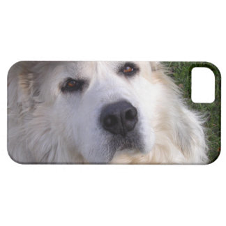Great Pyrenees iPhone 5 Covers