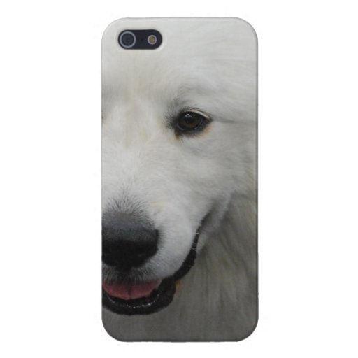 Great Pyrenees iPhone 5 Cases