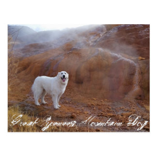 Great Pyrenees Mountain Dog post card