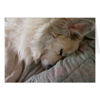 Great Pyrenees Notecard Cards