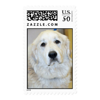 Great Pyrenees Postage Stamps
