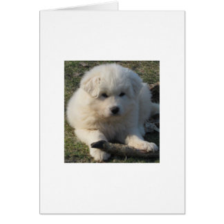 Great Pyrenees Pup Little Girl Card