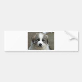 Great Pyrenees Puppy Bumper Sticker