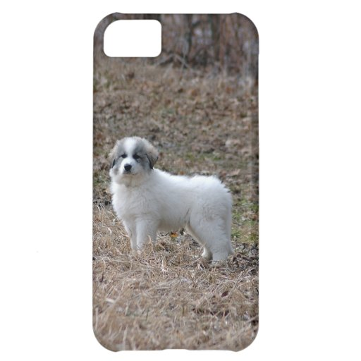 Great Pyrenees Puppy iPhone 5C Covers