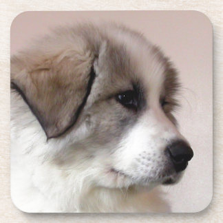 Great Pyrenees Puppy Beverage Coaster