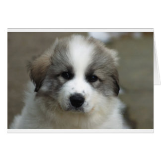 Great Pyrenees Puppy Greeting Card