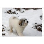 Great Pyrenees Puppy Greeting Cards
