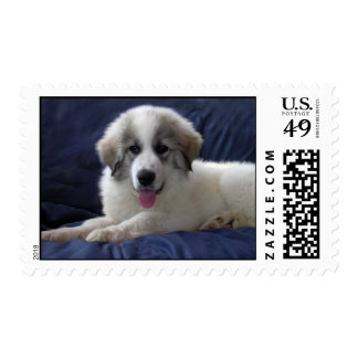 Great Pyrenees Puppy Postage