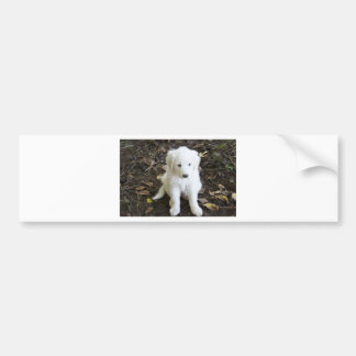 Great Pyrenees Puppy Rose Bumper Sticker