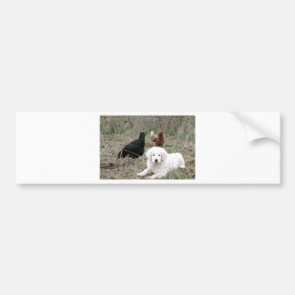 Great Pyrenees puppy with free range chickens Bumper Sticker