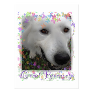 Great Pyrenees purple Postcard
