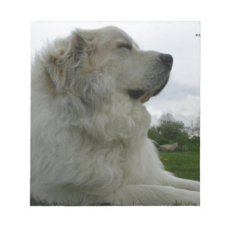 Great Pyrenees Scratch Pad