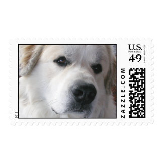 Great Pyrenees Stamps