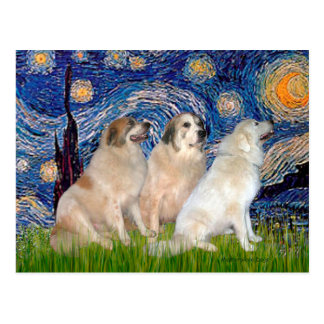 Great Pyrenees (three) - Starry Night Postcard