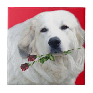 Great Pyrenees with Roses Tile