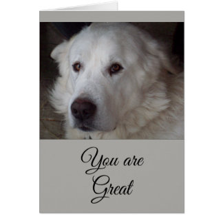 Great Pyrenees - You are Great Card