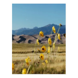 Great Sand Dunes and Flowers Postcard