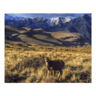 Great Sand Dunes National Park, Colorado Poster