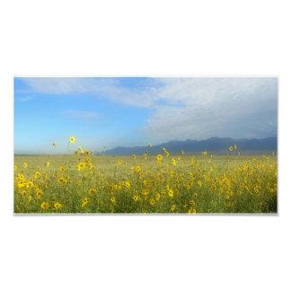 Great Sand Dunes, Sangre de Cristo, flowers Photo Print