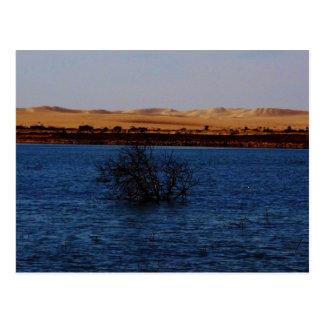 Great Sand Sea, Siwa Oasis, EGYPT Postcard
