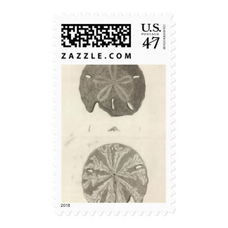 Great Sea Urchins Postage