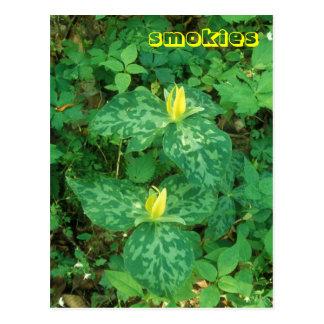 Great Smoky Mountains Yellow Trillium Wildflowers Postcard
