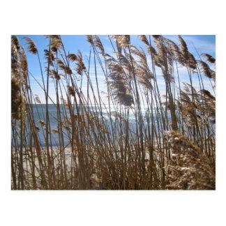 Great South Bay at Blue Point, NY Postcard