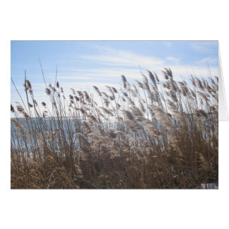 Great South Bay through the reeds Card