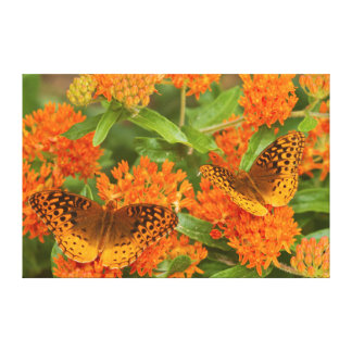 Great Spangled Fritillaries on Butterfly Milkweed Canvas Print