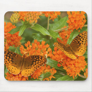 Great Spangled Fritillaries on Butterfly Milkweed Mouse Pad