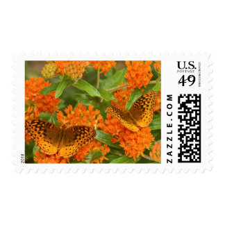 Great Spangled Fritillaries on Butterfly Milkweed Postage